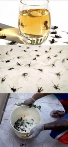 COLOQUE ISTO NA SUA CASA – EM POUCA HORAS, NÃO HAVERÁ NENHUMA MOSCA OU MOSQUITO NO LOCAL! #mosca #matamosca #remediocaseiro
