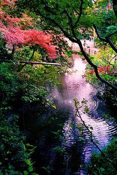 ପ•̥͙⁌̴̶̷ั◟◞ુ⁌̴̶̷ั•̥͙ೄ Beautiful natureପ•̥͙⁌̴̶̷ั◟◞ુ⁌̴̶̷ั•̥͙ೄ Jindai-ji, Tokyo, Japan