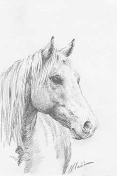 Yelena Shabrova ~ A sketch a day: horse head ~ graphite pencil on Canson drawing paper, 4″ x 6″ ~ Miscalculated where the horse should go on the piece of paper, but otherwise happy with the sketch. The subject was a beautiful chestnut, most likely a resident of the horse boarding facility across the street from our home in Cupertino, CA. ~ http://shabrova.com/artblog/a-sketch-a-day-horse-head-4/ ~ horse portrait