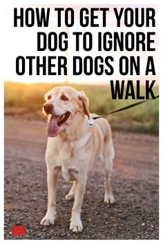 Check out these easy dog training tips on how to teach your dog to ignore other dogs on a walk while on a leash. Best Dog Training, Brain Training, Dog Training Collars, Service Dog Training, Dog Training Books, Puppy Training Tips, Training Classes, Training Videos, Dog Training Techniques