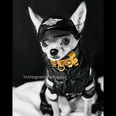 … To executive bad boy realness. | Pepi The Chihuahua Is Instagram's Hottest Supermodel