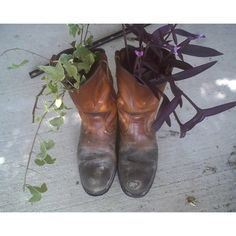 Use boots as planters! Don't forget to poke holes in the soles so excess water can flow out. The plants we used are Wandering Jew And climbing ivy.
