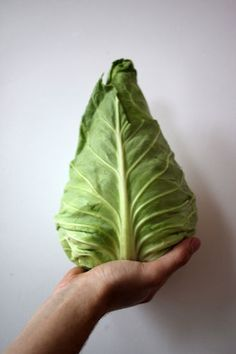 Organik beyaz lahana tazemasa.com'da.