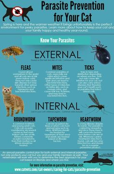 Parasite aren't just for outdoor cats, indoor dwelling felines are at risk too!