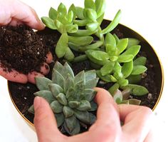 DIY Simple Succulent Garden | His & Hers and the Dogs'