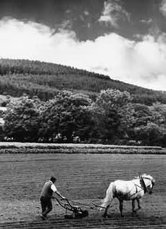 Old Ireland country image, Irish farmer & horse plough