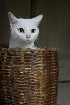 ネコ調教3ヶ条とは? 映画『猫侍』の白ネコが可愛すぎる件