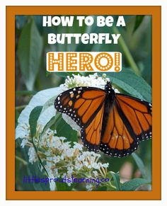How to be a Butterfly HERO! Save the Monarchs! Save the Pollinators! Get the kids involved!