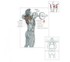 shoulder width workout - Upright Row
