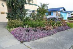 Kalanchoe pumila in bloom Mediterranean Garden, Garden Inspiration, Landscape Design, Succulents, Bloom, Plants, David, Google, Landscape Designs