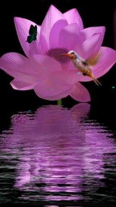 Best Indoor Garden Ideas for 2020 - Modern Wallpaper Nature Flowers, Flowers Gif, Beautiful Rose Flowers, Flower Phone Wallpaper, Flowers Nature, Exotic Flowers, Beautiful Butterflies, Beautiful Birds, Purple Flowers