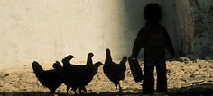 Your gift of nine full-grown hens will improve the health and well-being of a family living in rural Nicaragua. Cost: $50.00.