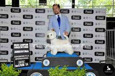 Cinofilia Sudamericana Dogs, Animals, Buenos Aires Argentina, Exhibitions, Animales, Animaux, Doggies, Animais, Dog