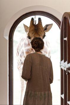 En sjiraff som vil ha mat. Søt hva?  ******************************** Photographer Shares Breakfast with Giraffes in Kenya