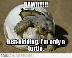 False alarm, just a turtle