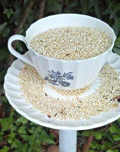 Tea for the birds: DIY teacup bird feeder