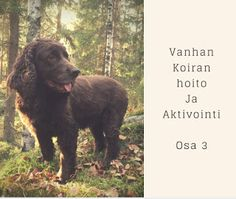 www.koiraharrastaja.fi