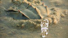 鱟記 - 馬蹄蟹