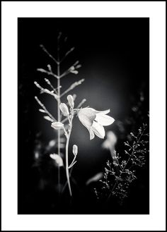 Black and White Photography - Extra large wall art - Black and white flower photo - Oversized Art - Vintage Style Photo