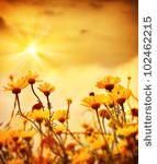 plano de fundo,bela,beleza,floração,florescendo,brilhante,camomila,camomila,margarida,escuro,crepúsculo,campo,flora,florais,flor