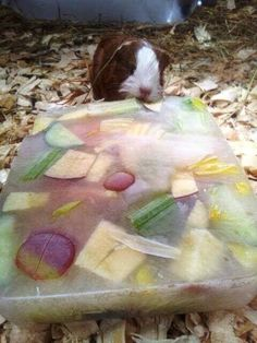 Farmer Palmer's idea to keep guinea pigs cool in summer hot weather http://farmerpalmers.co.uk/
