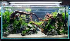 Aquascaping contest at CIPS Exhibition in Guangzhou, China. #FAAO #Aquascaping #Planted #Aquarium #Aquatic #Plant #Freshwater #aquascape #plantedtank #plantedaquarium #CIPS #China #AquascapingMakesMyWorldGoRound