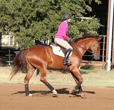 Have you ever ridden a perfect line in the hunter ring, only to miss a lead change afterward, diminishing, and often eliminating, your chances of placing in the class? If so, you're not alone. While
