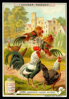 1897. Types of Poultry (No. 2) trading card issued by Liebig Extract of Beef Company. S531.