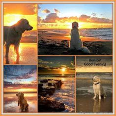 Dogs and the sea Beautiful Collage, Beautiful Dogs, Life Is Beautiful, Sunrise Pictures, Nature Pictures, Animals Kissing, Animals And Pets, Animal Hugs, Good Night Blessings