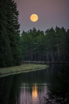Moon overlooking the forest created by God.