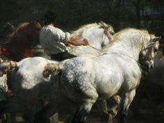 The Horse Fair (detail) by Rosa Bonheur. My favorite piece of art.