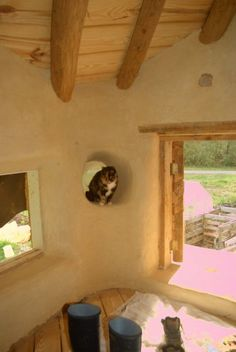 Building a cob fortress - here's a picture of Bastet sitting in the round window