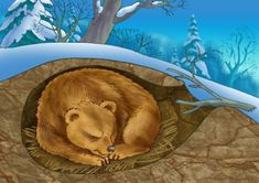 All Living things maintain a stable internal environment. This correlates because this picture is showing how a bear stays warm in the winter.