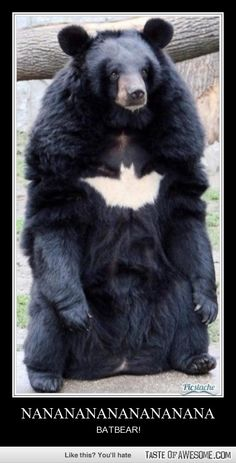 BATBEAR!!! @LeAnne McCord @Matt Brown this made me think of you two <3