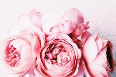flowers-1015x677.jpeg (1015×677)
