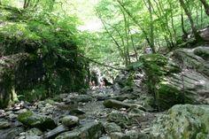 Wandeling langs de Ninglinspo  De enige bergrivier van België. Mystical Forest, Hiking Europe, Ardennes, Destination Voyage, Go Outside, Holiday Destinations, Hiking Trails, Holiday Travel, Where To Go