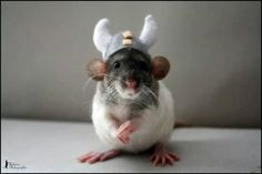ahaha, omg :p viking rat