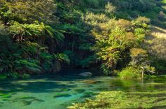 The Blue Spring near Putaruru New Zealand [OC] [4836x3199]