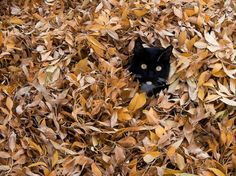 Leaves of cat