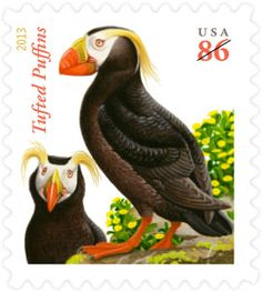 USPS - 2013  With tufts of bright yellow feathers springing from its head, the tufted puffin looks like a clown to some and a punk rocker to others. Two of these unmistakable sea birds appear on the Tufted Puffins stamp, depicted during breeding season when their signature yellow plumage appears.