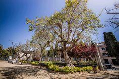 Fotos: Isaias Mena - Ajuntament de Tarragona Florida, Pictures, The Florida