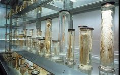 Fiona Bruce's Britain: The Hunterian Museum, London - Telegraph