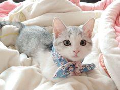 Beautifully colored cat