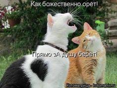 ТАЮ ОТ УМИЛЕНИЯ | KotoMail.ru
