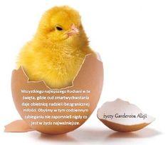 """""""Garderoba Alicji"""": Życzenia Wielkanocne"""