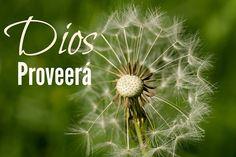 Floreciendo en Cristo: Dios Proveerá