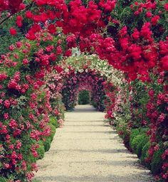 Rose Garden The rose arbor of Planting Fields Arboretum - The rose arbor of Planting Fields Arboretum. Love Flowers, Beautiful Flowers, Beautiful Places, Simply Beautiful, Beautiful Life, Pretty Roses, Love Rose, Green Flowers, Small Gardens