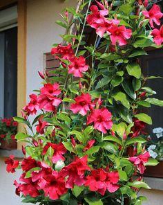 Plants, Decor, Gardens, Gardening, Needlepoint, Decoration, Plant, Decorating, Planets