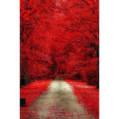 ♕ Live Your Dreams ♕ ❤ liked on Polyvore featuring backgrounds, images, photos, random, red and wallpaper