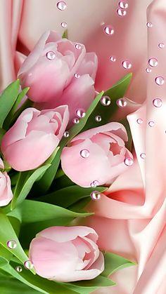 Pretty Pink Roses - My site Beautiful Rose Flowers, Beautiful Flowers Wallpapers, Exotic Flowers, Amazing Flowers, Pretty Flowers, Flower Background Wallpaper, Flower Phone Wallpaper, Flower Backgrounds, Flower Wallpaper